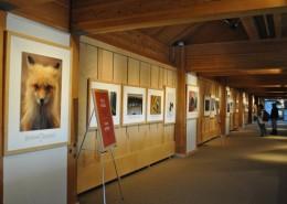Canadian Wildlife Photographs 2009