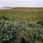 Kittigazuit Archaeological Sites