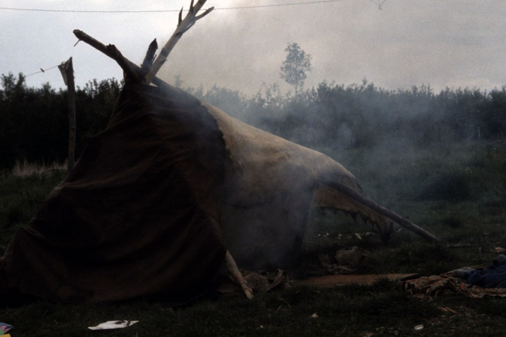 photo-jackson-023-Nahanni-Butte-tanning_moose