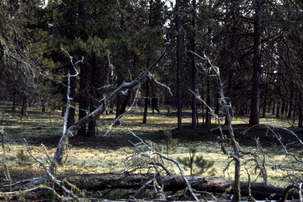 photo-jackson-19-TroutLake_treefall