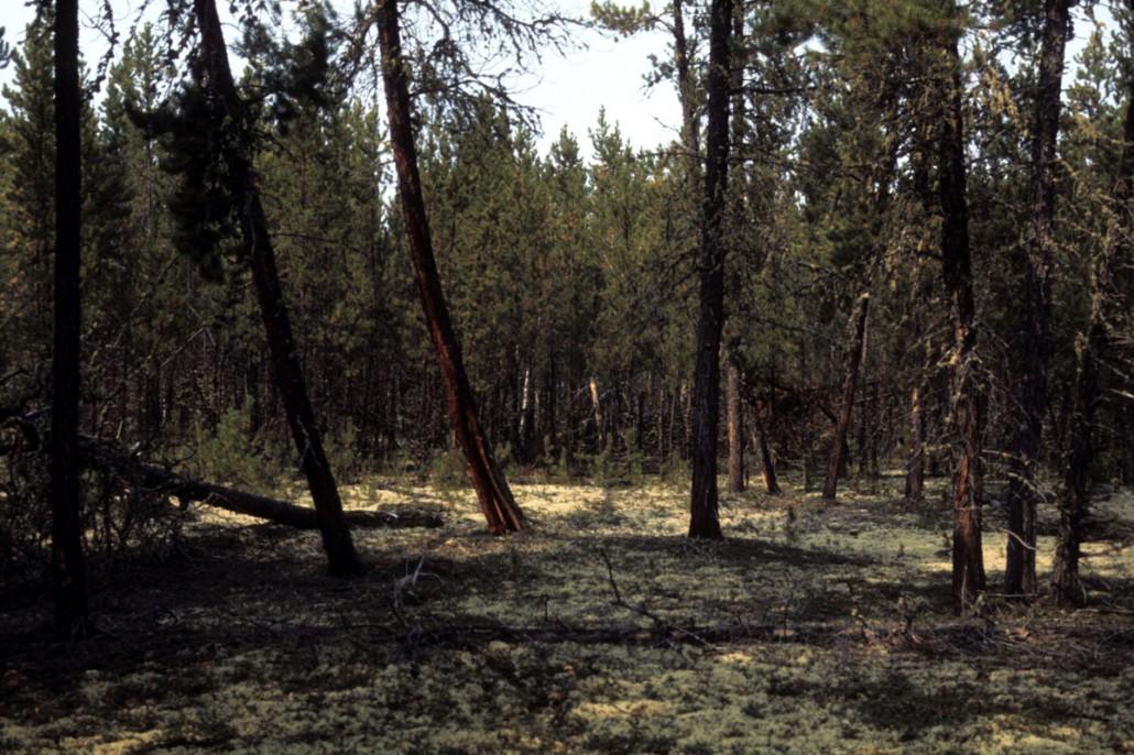 photo-jackson-20-TroutLake_trees