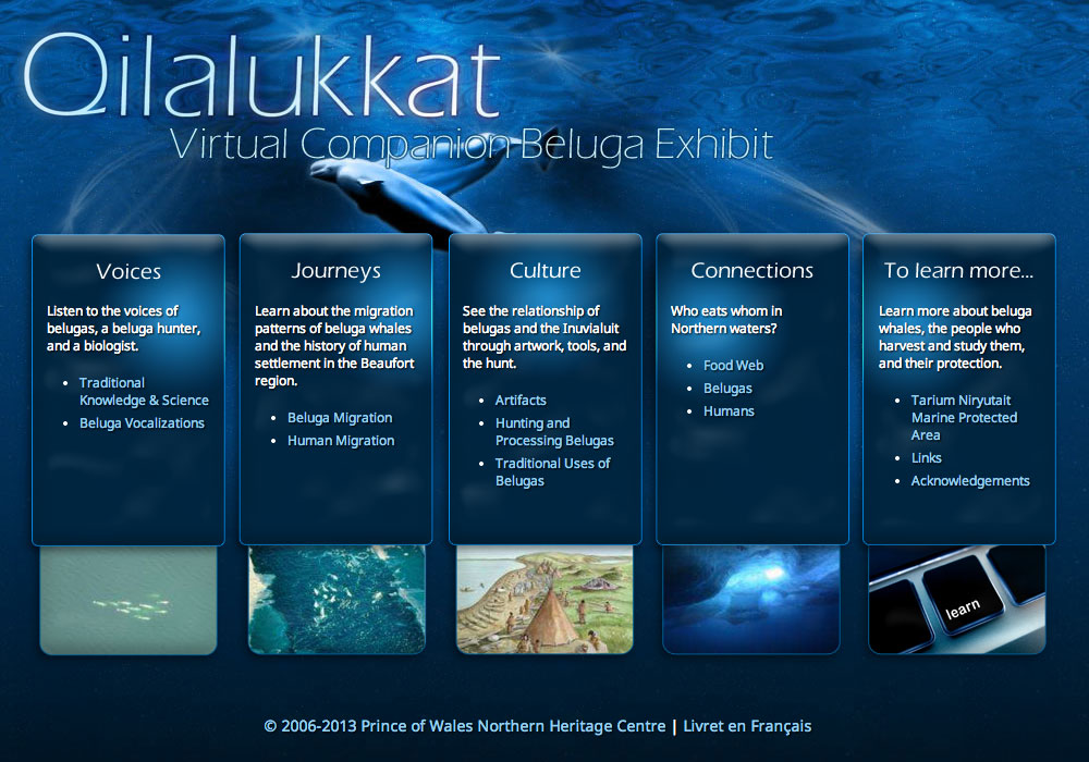 Qilalukkat Virtual Companion Beluga Exhibit