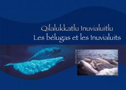 Les bélugas et les Inuvialuits