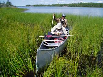 Canoe in reeds.