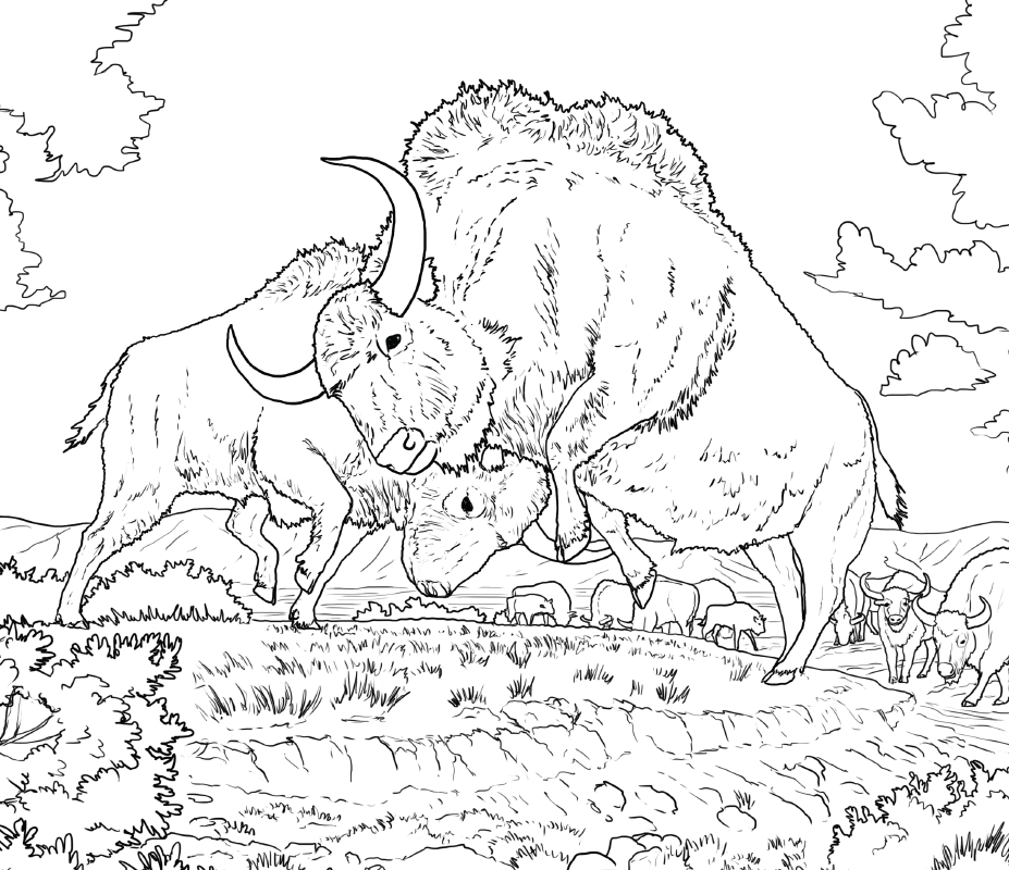 Ice Age Bison Colouring Contest Winners Announced PWNHC