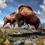 Ice Age Bison Exhibit