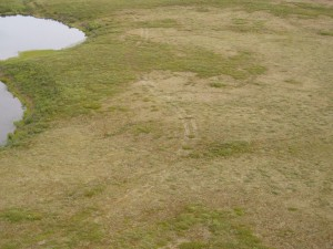 Figure 1: Aerial view of typical seismic trail on Richards Island
