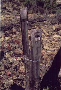 One of the two claim posts found.