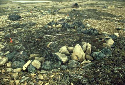 Stone tent ring at site NgNe-2 near Cambridge Bay. Many animal bones lie under the sod inside the ring.